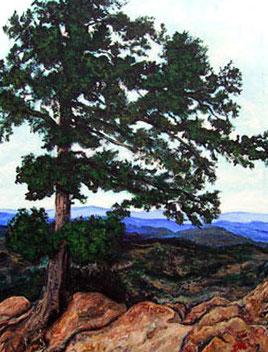 Wind blown tree on Flagstaff mtn Boulder Colorado