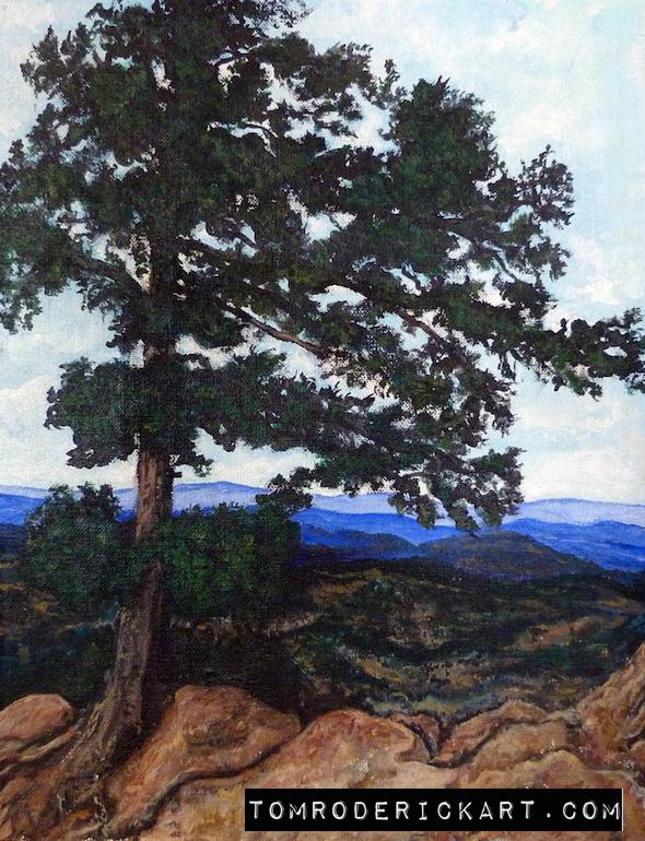 Flagstaff Mountain Tree